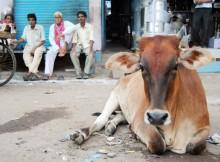Viajar a India - Consejos