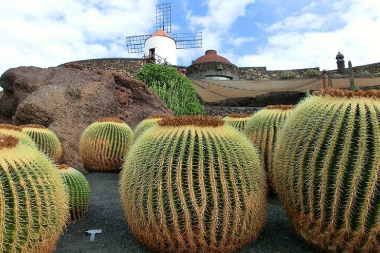 Planes alternativos que hacer en Lanzarote - cactus