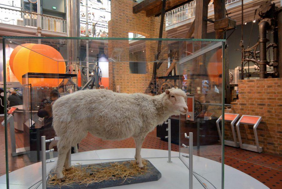 oveja dolly museo nacional de escocia