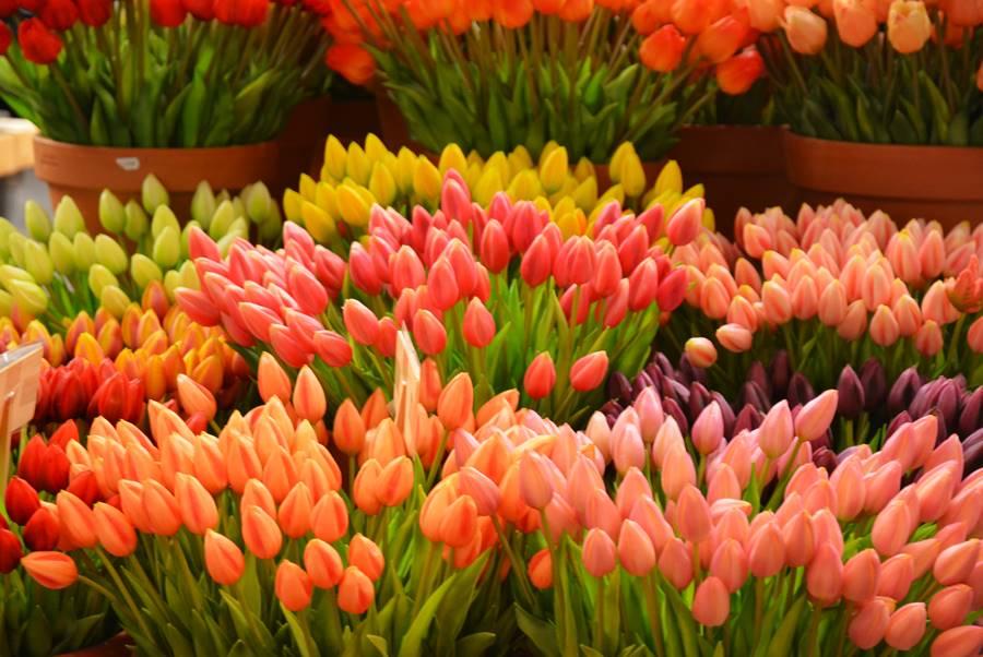 Flores en el mercado de las flores de Ámsterdam