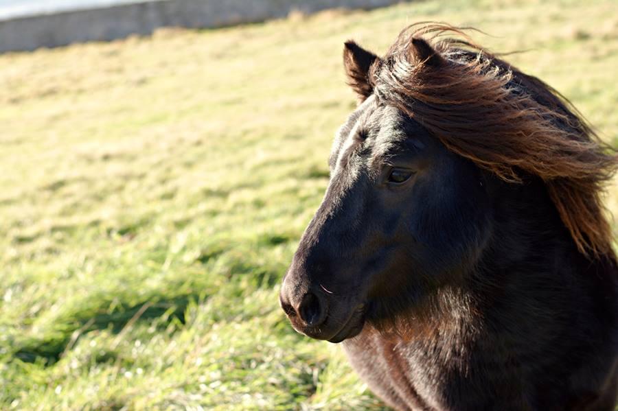 Consejos para viajar a las Shetland