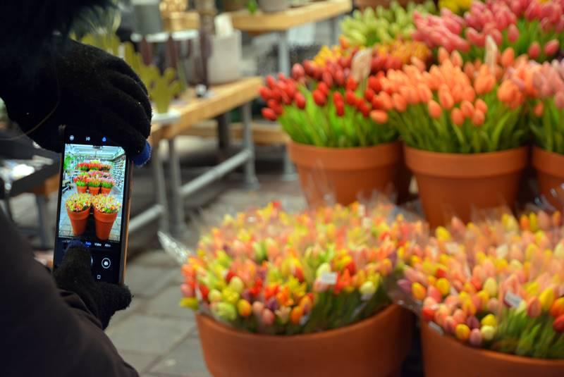 Una persona hace una foto con su teléfono a los tulipanes que están a la venta.