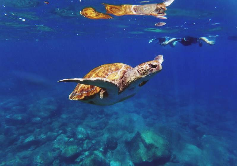 Una tortuga nada junto a una persona en las aguas de Tenerife.