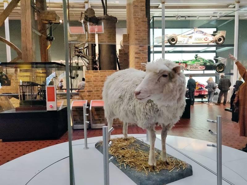 Qué ver en Edimburgo - Oveja Dolly en el museo.